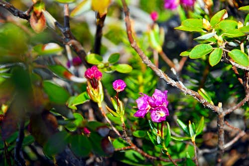 Purple Flowers on Shrub
