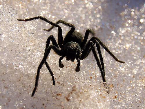 Weird snow spider