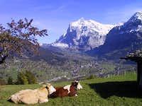 Wetterhorn with Grindelwald