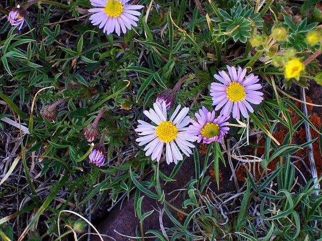 Elk Mountain flora
