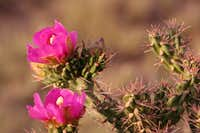 Beautiful Cacti Flowers