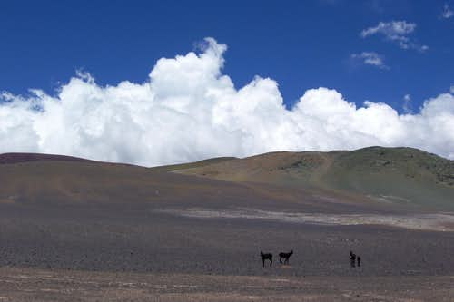 clouds and donkeys