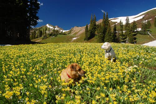 Sopris and Raymond amongst the Glacier Lilies