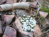 Small white flowers...