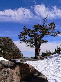 Mills Lake Tree