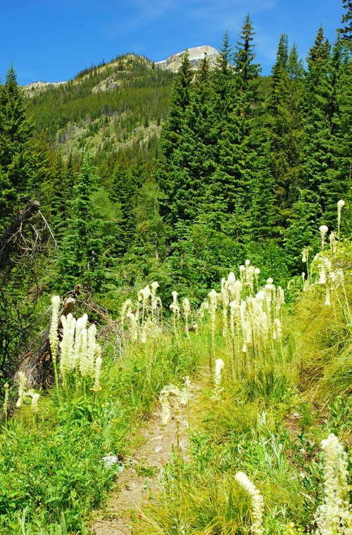 Beargrass and Watchtower Peak