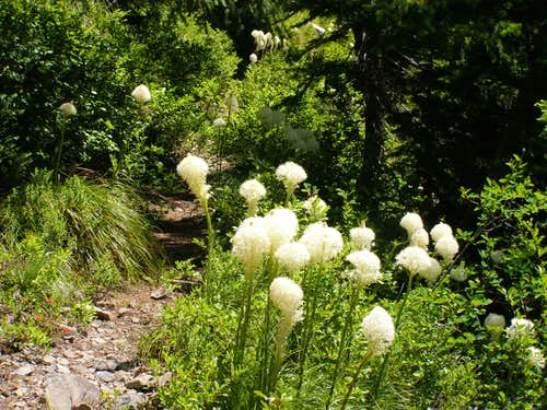 Beargrass trail