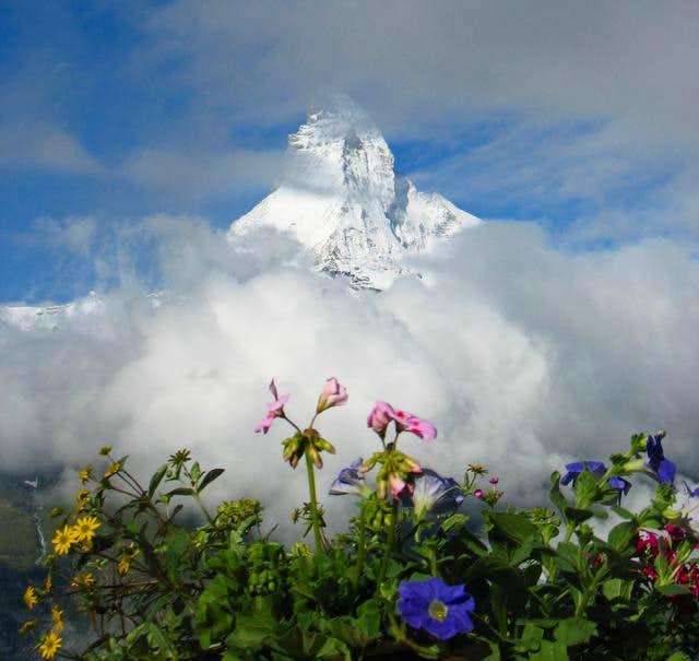 Matterhorn and Flowers