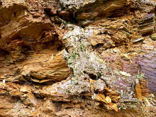Lichens on a scarp...