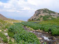 Wild Flowers Near Emerald Lake