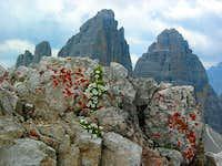 Tre Cime di Lavaredo (Drei Zinnen) from Monte Paterno