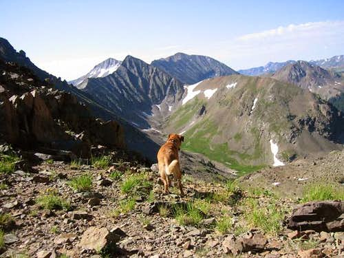 My dog Sopris viewing the...