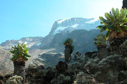 Kilimanjaro from Barranco...