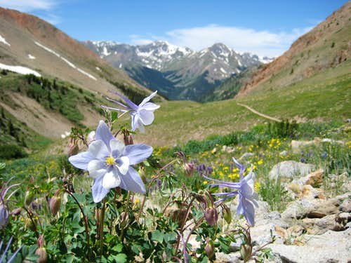 Columbines and Handies