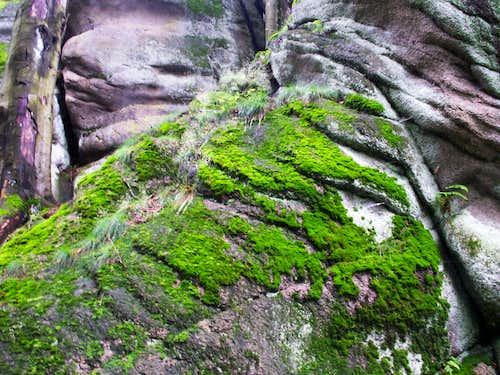 Mosses ...