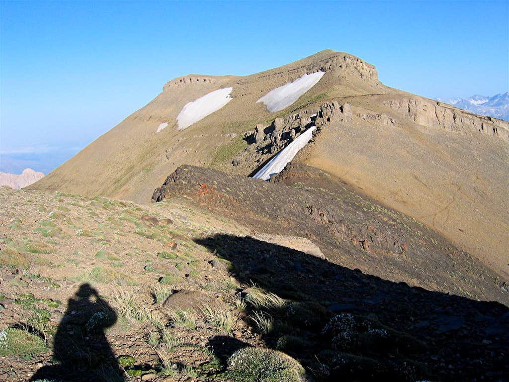 Summit Basham Sardi