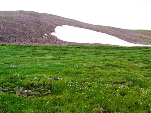 meadow on the ridge