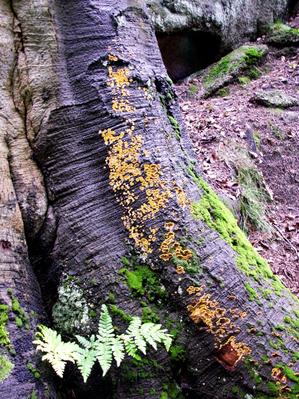 Mushrooms on a trunk ...