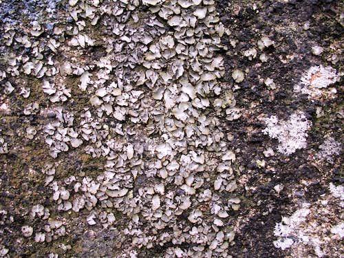 Lichens...