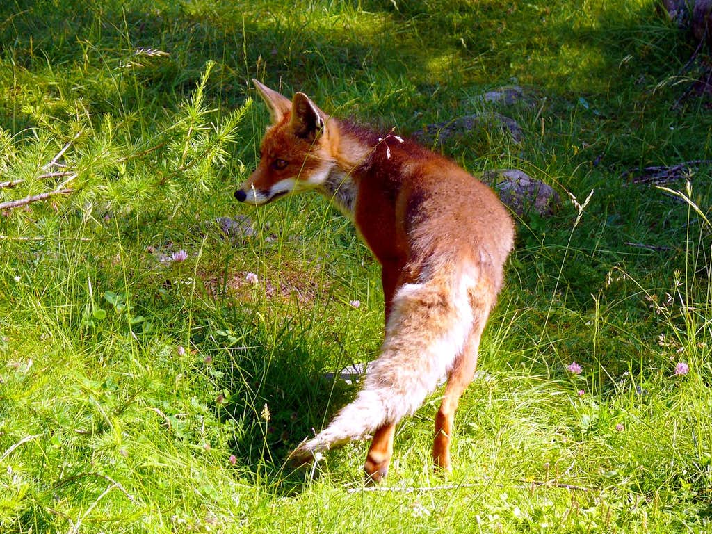 The Fox (Valnontey, Gran Paradiso), 13 luglio 2007