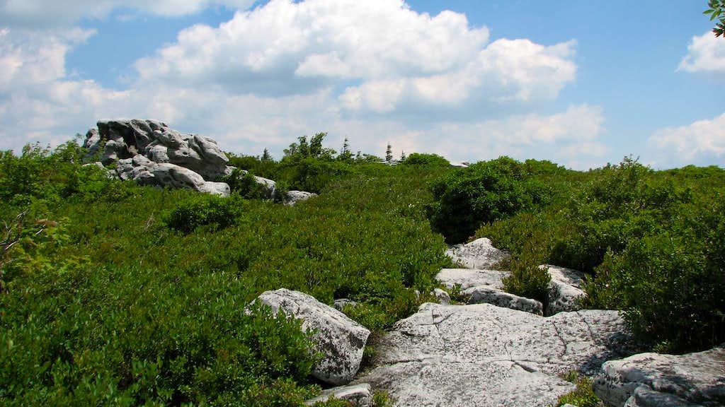 Near the summit of Bear Rocks.