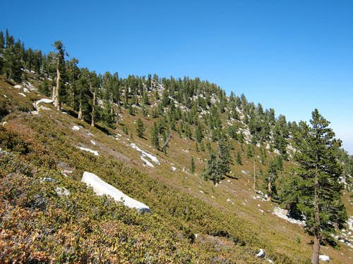 Miller Peak (10,400') from trail to San Jacinto Pk