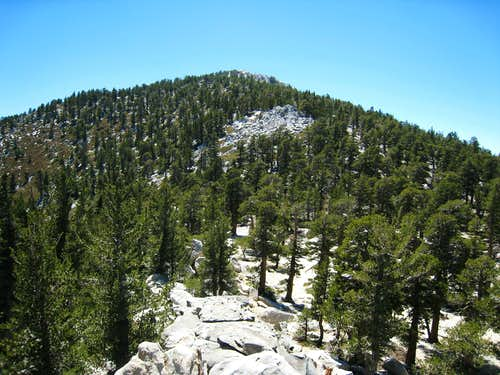 San Jacinto Pk (10,834\') from summit of Miller Pk (10,400\')