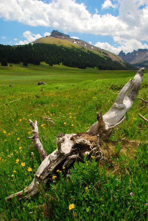 Dead Tree in Meadow