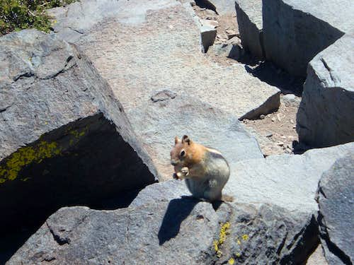 Chipmunk having lunch on the summit