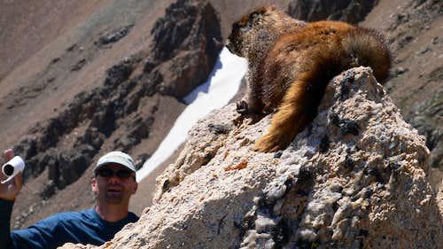 Dominique est attaqué par une marmotte!