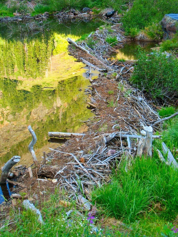 Broads Fork Beaver Dam