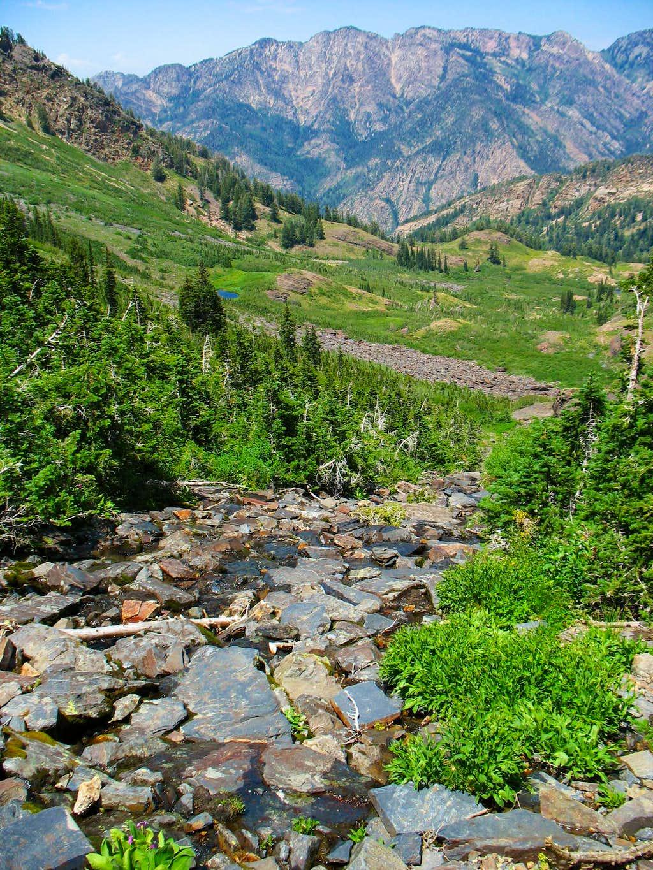Broads Fork Creekbed