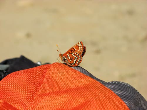 Butterfly in The Enchantments