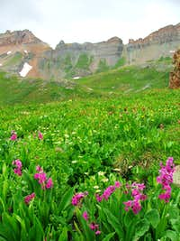 Ice Lakes Basin Flowers