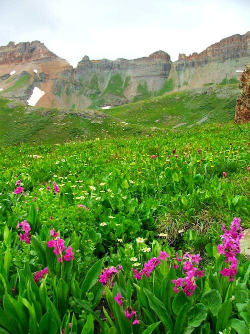 Ice Lakes Basin Flowers