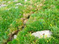 Colorado Wildflowers