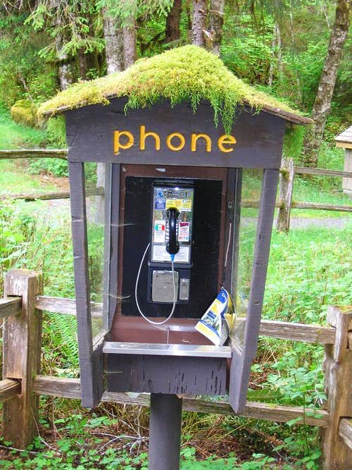Rain forest phone booth