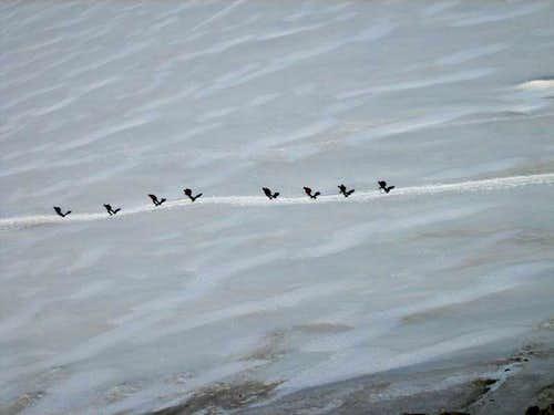 Hikers on the Glacier du Geant