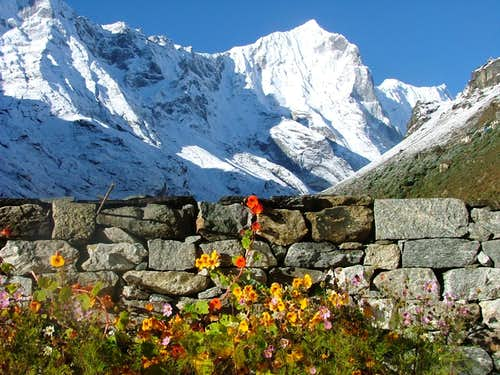 Nasturtiums in Nepal