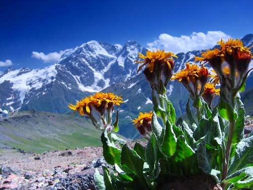 Donguz Orun/ Central Caucasus - by: Jarek V.