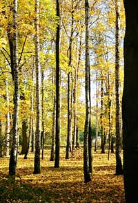 Autumn in My Hometown