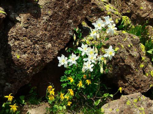 Orno Peak Flowers