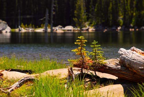Small Trees at Fish Lake