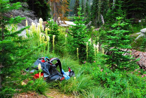 Beargrass Along Trail