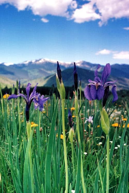Iris-Culebra Range