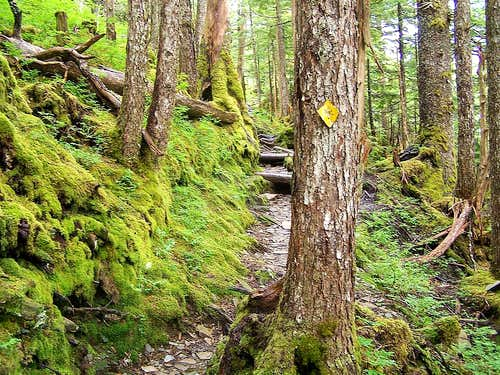 Mossy Deer Mt trail
