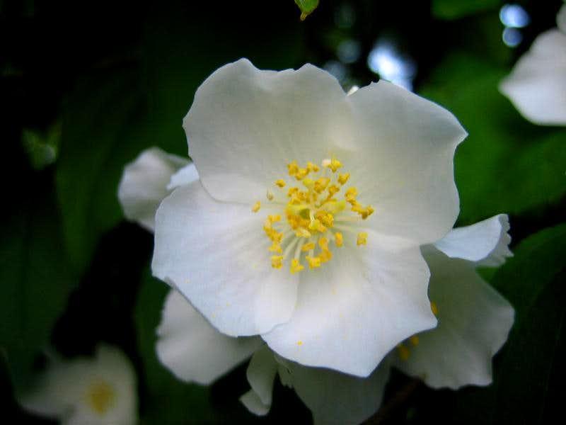 flower in june