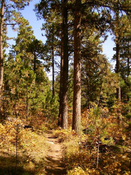 Crow Peak Trail View