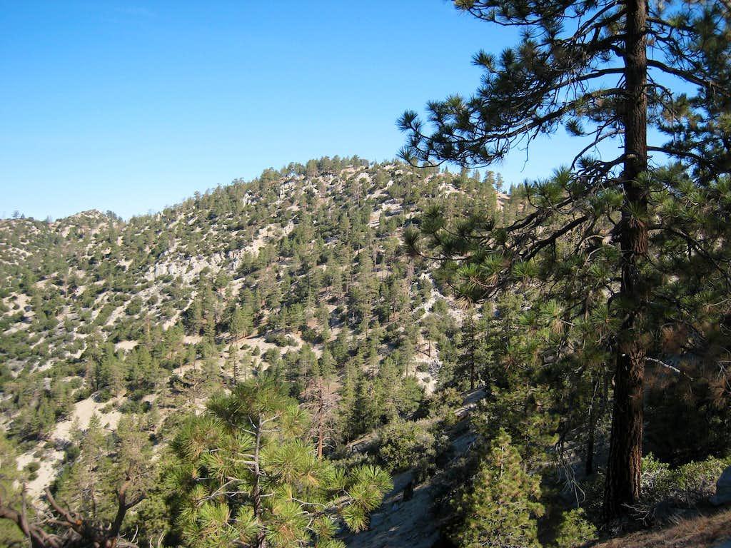Winston Ridge (7,003')