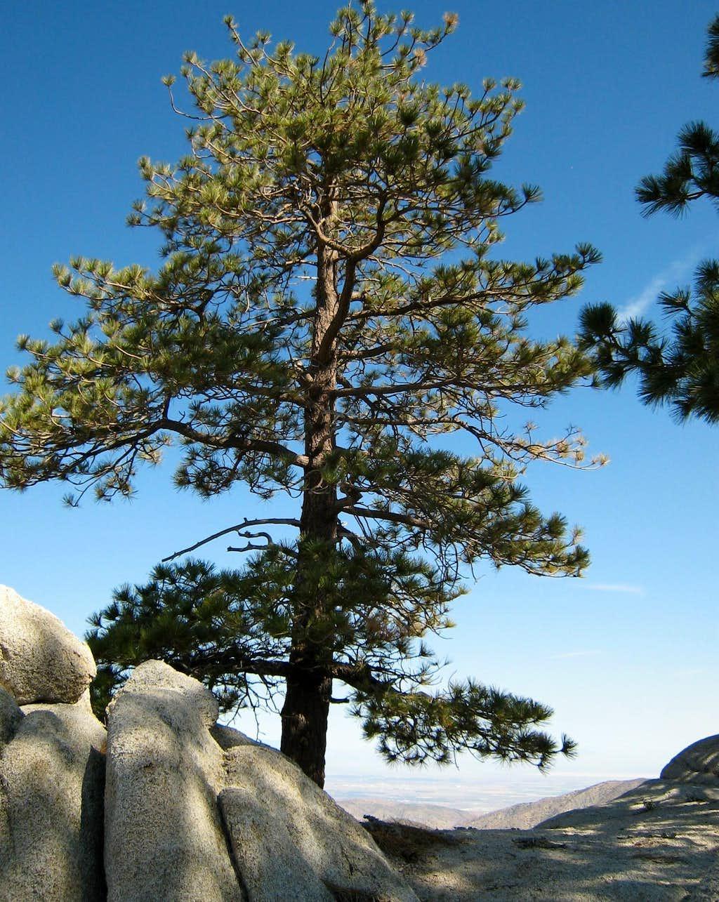 View NE from summit of Winston Ridge